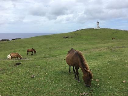 のどかな放牧風景 手前の馬は身ごもっている.JPG
