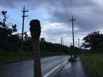 島の街路樹も風にはかなわない.JPG