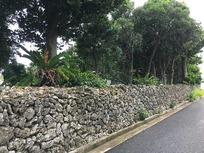 民家の石垣 この石は実はサンゴです.JPG