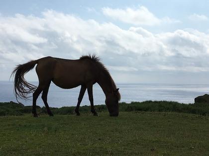 草を食む与那国馬.JPG